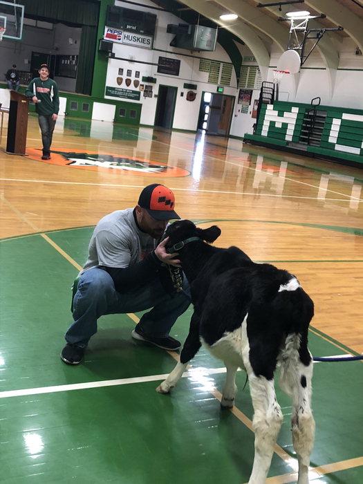 Mr vDayton kisses a cow