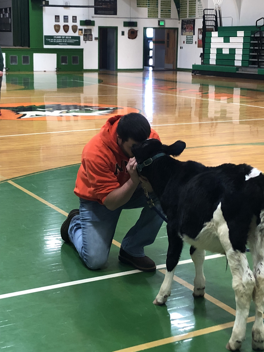 Mr. Dunlap kisses a cow